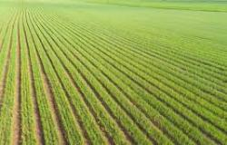 Agro Chemical  Crop Protection